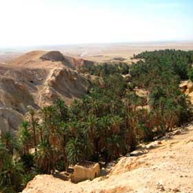 tunez5